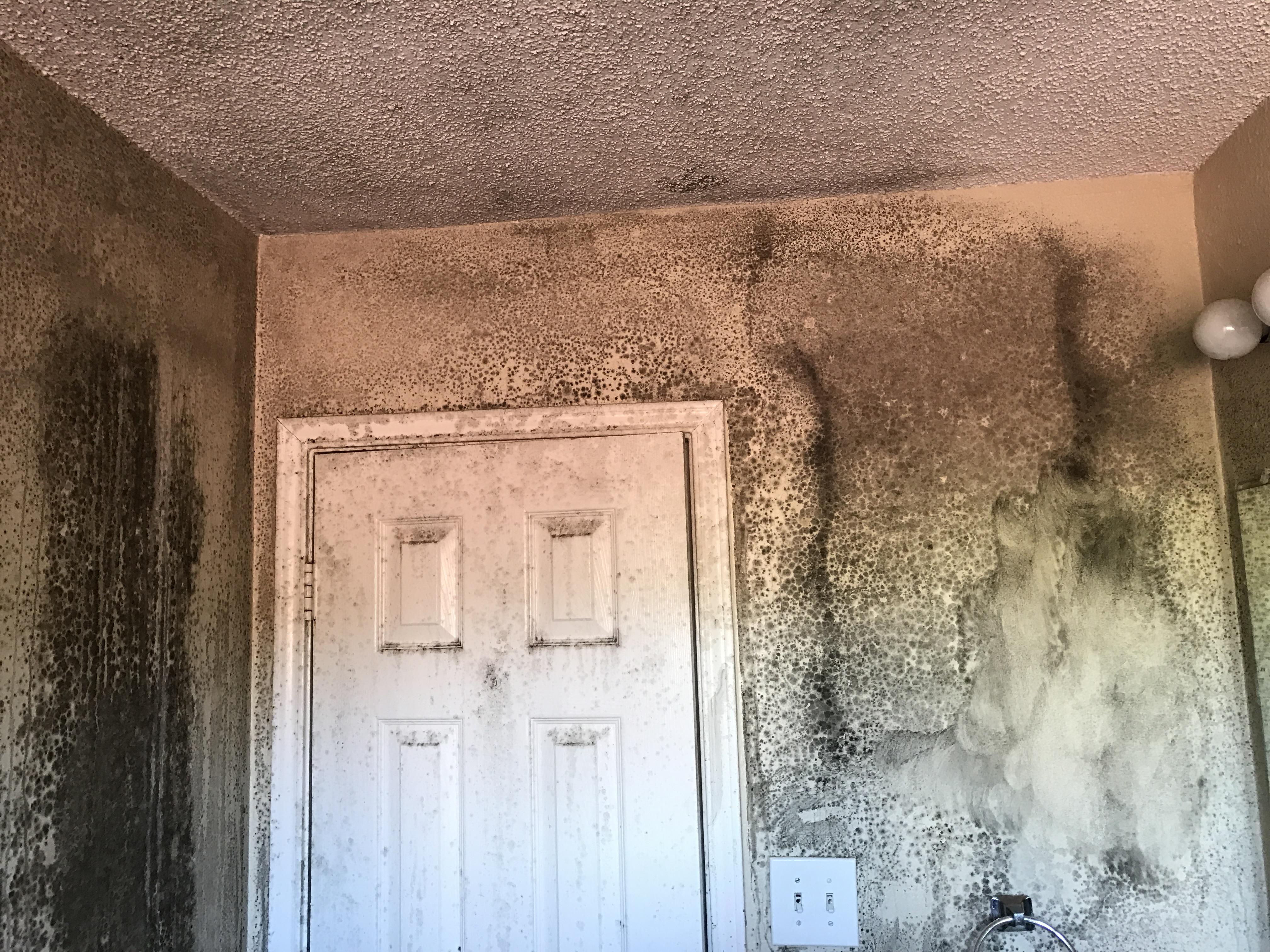 Texas Mold Testing
